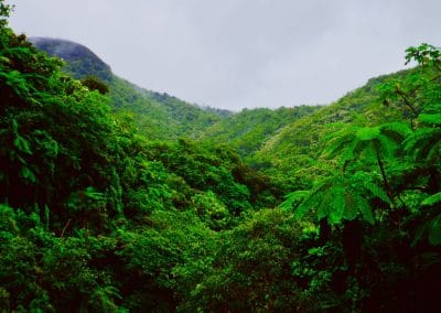 el-yunque-fog-forest-784148