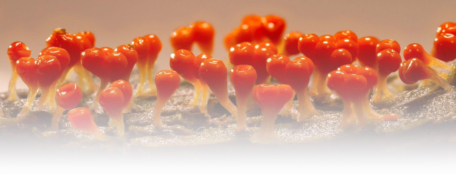 Anti-Fungal Therapy