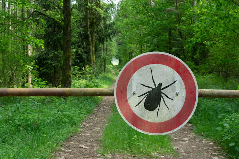 Tick Season and COVID-19: Rise of Lyme Disease? - Lyme Mexico Clinic