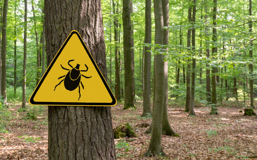 Lyme Disease Treatment in May 2021